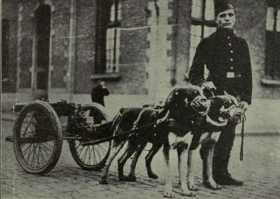 belgian-machine-gun-dogs
