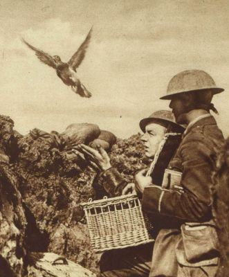 british-carrier-pigeon-being-released