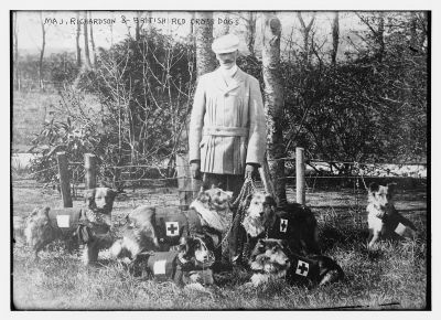 british-red-cross-dogs