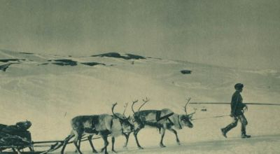 british-supply-sledge-pulled-by-reindeer-in-russia
