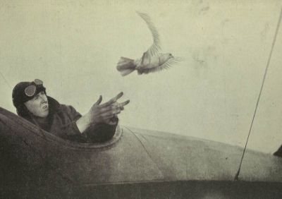 carrier-pigeon-released-from-aircraft