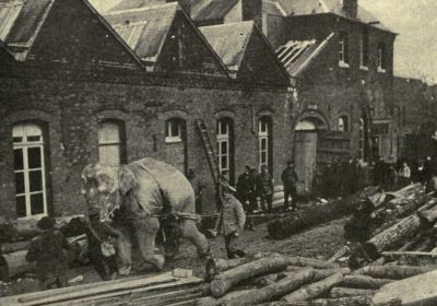 elephants-used-by-german-troops-for-hauling-timber