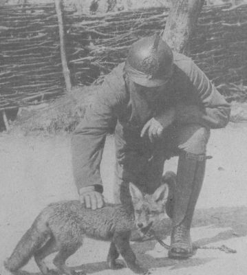 french-soldier-with-pet-fox