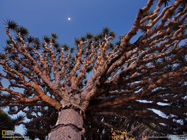 01-socotra-icon-dragons-blood-tree_1600