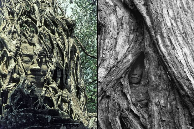 Buddha-being-swallowed-by-roots-at-Angkor-Archaeological-Park