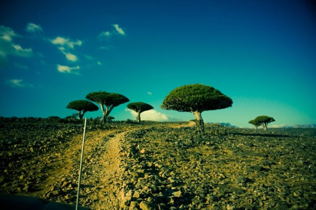 Dicksam-plateau-to-Wadi-Daerhu-Socotra