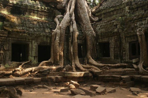 Iconic-tree-at-Ta-Prohm-Siem-Reap-Cambodia