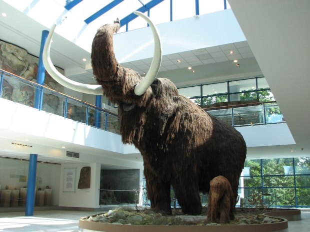 Lifesize-models-of-a-Woolly-Mammoth-and-a-baby-Woolly-Mammoth-in-the-Brno-museum-Anthropos