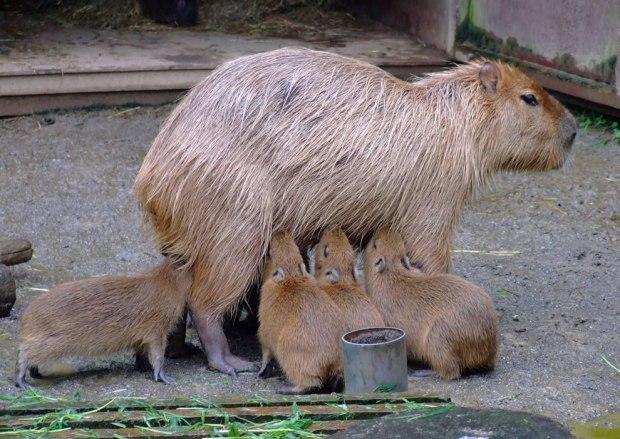Mom-moom-mooom-moooom