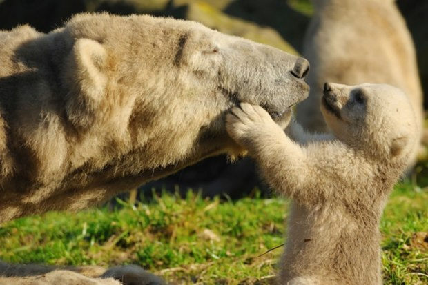 Mother-bear-and-baby-bear-Give-me-a-kiss