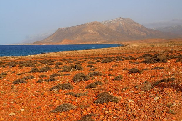 Socotra-is-the-largest-of-four-islands-off-Yemen-that-make-up-a-small-archipelago