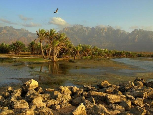 Socotra-Island-Yemen
