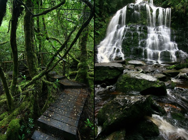 Vibrant-green-mossy-path-and-waterfall-in-the-Great-Wildnerness-of-Tasmania